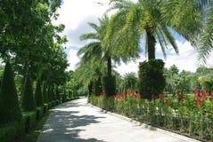 Estrada bonita com árvores Fotografia de Stock