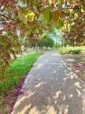 Estrada bonita com flores e árvores foto de stock royalty free