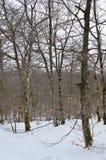 A estrada bonita de Forest Completely Snowy On The da faia ao salto do rio nevou Nervion A natureza ajardina a neve Fotografia de Stock Royalty Free