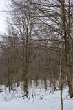 A estrada bonita de Forest Completely Snowy On The da faia ao salto do rio nevou Nervion A natureza ajardina a neve Imagem de Stock