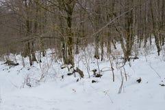 A estrada bonita de Forest Completely Snowy On The da faia ao salto do rio nevou Nervion A natureza ajardina a neve Imagem de Stock Royalty Free