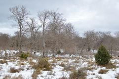 A estrada bonita de Forest Completely Snowy On The da faia ao salto do rio nevou Nervion A natureza ajardina a neve Foto de Stock Royalty Free