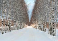 Estrada bonita do inverno Foto de Stock