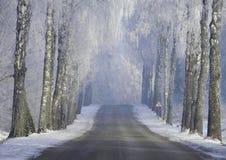 Estrada bonita do inverno Paisagem de Lituânia foto de stock
