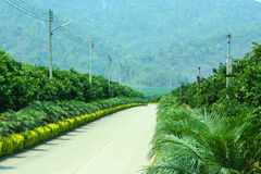 Estrada bonita na palma e no campo alaranjado Fotografia de Stock Royalty Free