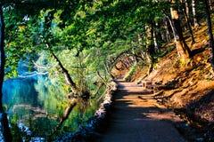 Estrada calma entre árvores e água Imagem de Stock