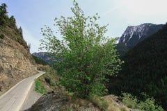 Estrada Canadá da montanha Foto de Stock Royalty Free