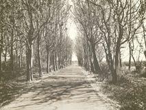 Estrada cercada por árvores Imagens de Stock