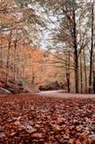 Estrada coberta pelas folhas secas Fotografia de Stock