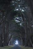 Estrada coberta por um dossel das árvores. Fotos de Stock Royalty Free