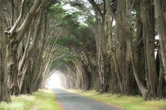 Estrada coberta por um dossel das árvores. Imagens de Stock