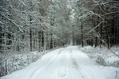 Estrada coberto de neve através da floresta místico da beleza fotos de stock royalty free