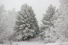 Estrada coberto de neve da bicicleta na floresta do inverno no dia nebuloso Imagem de Stock