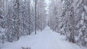 Estrada coberto de neve do inverno nas madeiras video estoque