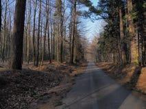 A estrada colorida na floresta com as árvores coloridas em montanhas de Beskid ajardina em Wapienica perto da cidade de BIELSKO-B Imagem de Stock