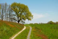 Estrada com árvore Imagem de Stock