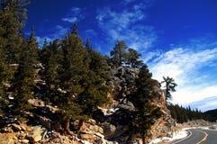 Estrada com árvores de pinho fotos de stock royalty free
