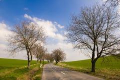 Estrada com aléia da árvore fotos de stock