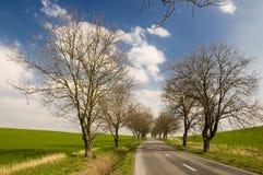 Estrada com aléia da árvore imagens de stock