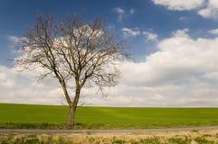 Estrada com aléia da árvore fotografia de stock royalty free