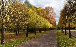 A estrada com as árvores amarelas e vermelhas foto de stock