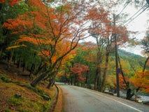 Estrada com as árvores coloridas do outono do bordo amarelo, verde, alaranjado e vermelho foto de stock royalty free