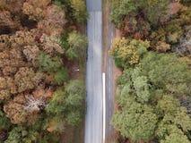 Estrada com as árvores do tempo do outono fotografia de stock
