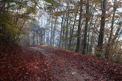 Estrada com as folhas do vermelho através da floresta Foto de Stock