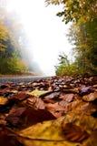 Estrada com folhas de outono, montanha de Olympus, Greece Fotos de Stock Royalty Free