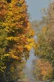 A estrada com o outono dourado da floresta Árvores com folhas de outono Imagem de Stock