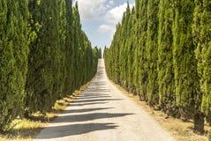Estrada com os ciprestes em Toscânia Imagem de Stock Royalty Free