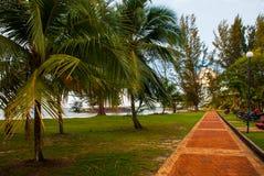 Estrada com palmeiras, cidade Bintulu, Bornéu, Sarawak, Malásia Pantai Temasya Tanjung Batu Imagem de Stock