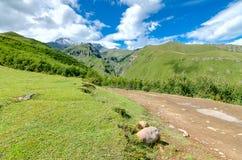 A estrada com pneu segue a condução às montanhas e Imagens de Stock