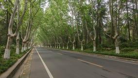 Estrada completamente de árvores planas Imagem de Stock Royalty Free