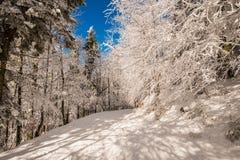 Estrada congelada da neve fotos de stock royalty free