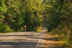 Estrada cortada através da floresta Fotos de Stock Royalty Free