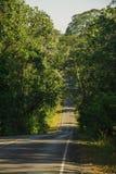 Estrada cortada através da floresta Imagens de Stock Royalty Free
