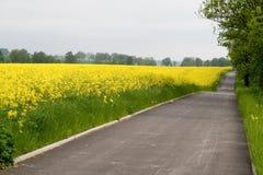 Estrada da bicicleta perto do campo amarelo da violação Fotografia de Stock Royalty Free
