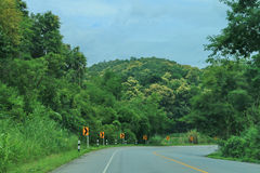 Estrada da curva na floresta Imagem de Stock Royalty Free