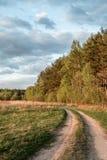 A estrada da floresta Fotos de Stock Royalty Free