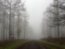 Estrada da floresta que conduz através das árvores na névoa Imagens de Stock Royalty Free