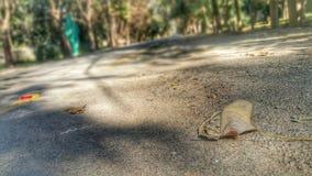 Estrada da folha da natureza Imagem de Stock