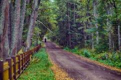Estrada da madeira Fotografia de Stock