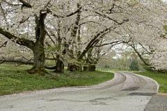 Estrada da mola Imagem de Stock Royalty Free