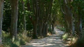 Estrada da montanha com as grandes árvores nos lados Zorra do movimento da câmera dentro filme
