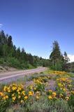 Estrada da montanha com wildflowers fotografia de stock