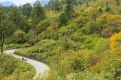 Estrada da montanha do enrolamento na floresta do outono Foto de Stock