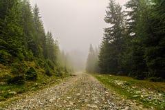 estrada da montanha entre pinheiros Fotos de Stock Royalty Free