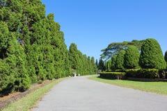 Estrada da natureza Foto de Stock