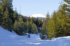 Estrada da neve e floresta nevado da montanha fotos de stock